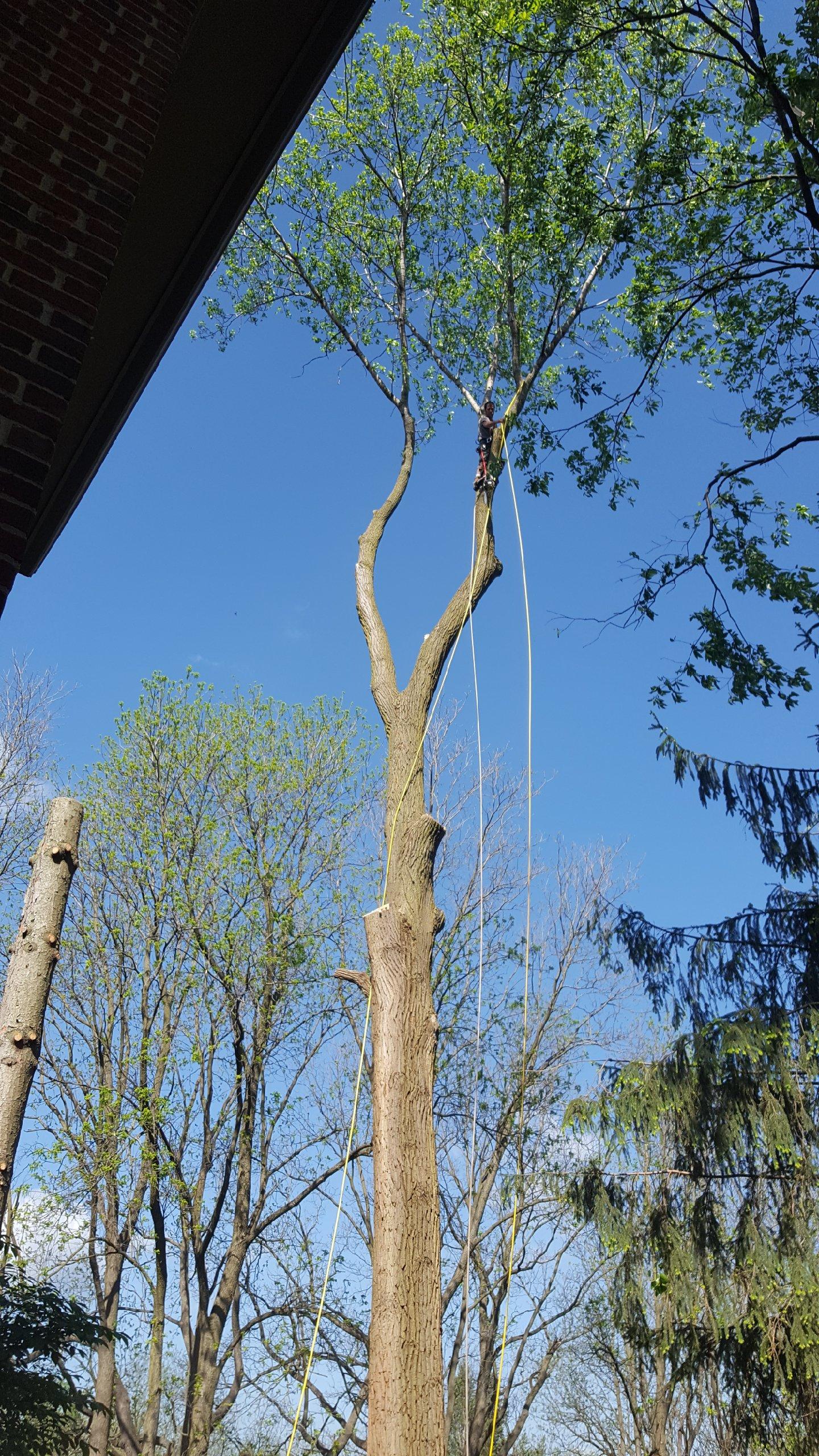 Coffman's Tree Service image 30