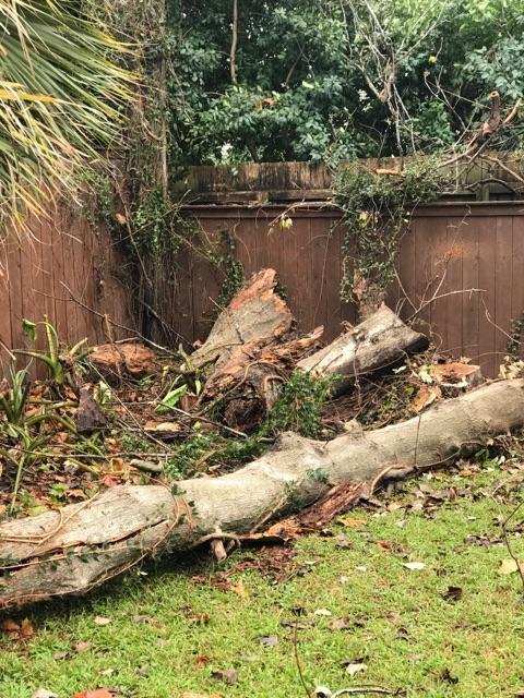 S & L Tree Service & Stump Grinding image 15