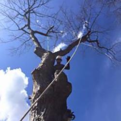 Clipper Tree & Landscape, Inc. image 9