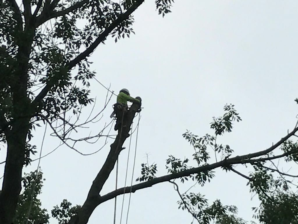 Four Brothers Tree Service Inc. image 29