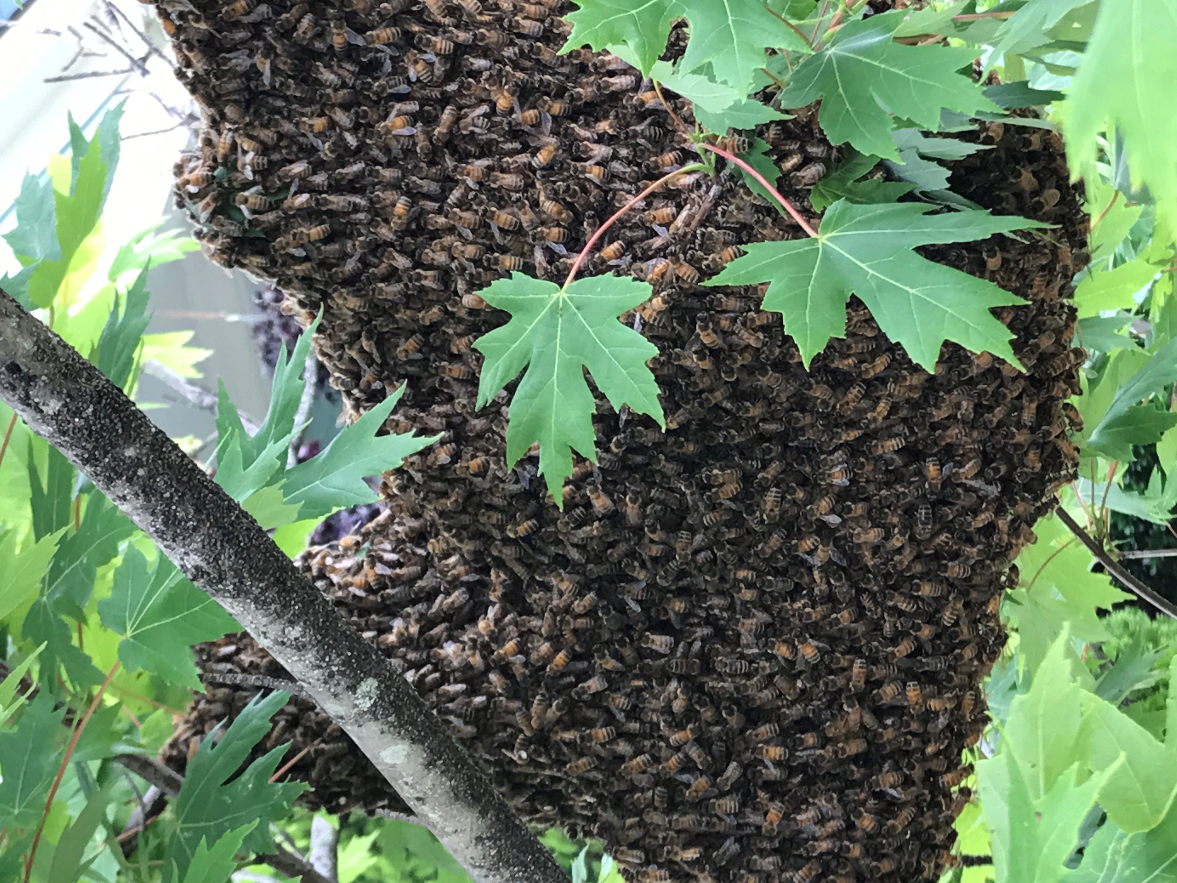NC Pest Control image 9