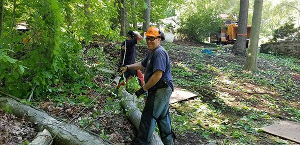 Affordable Tree Experts LLC image 7