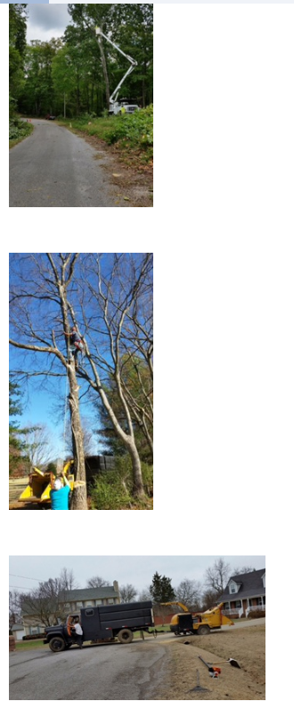 Hughes Tree Service image 6