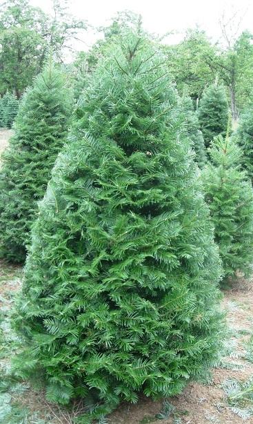 Crossties Tree Farm LLC image 4