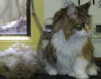 Suds 'N' Scissors Pet Salon in Victoria