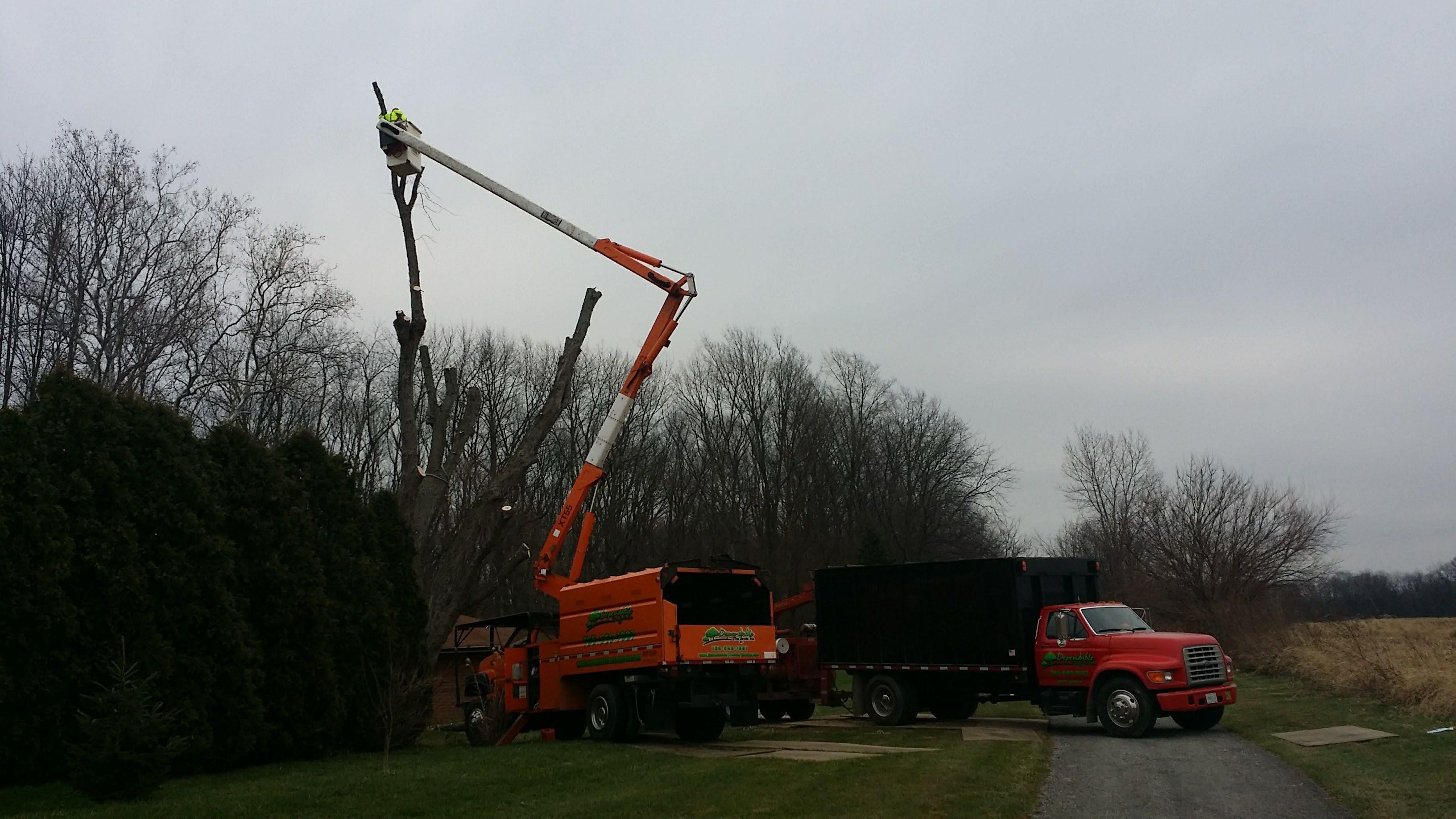 Dependable Tree Service, Inc image 3