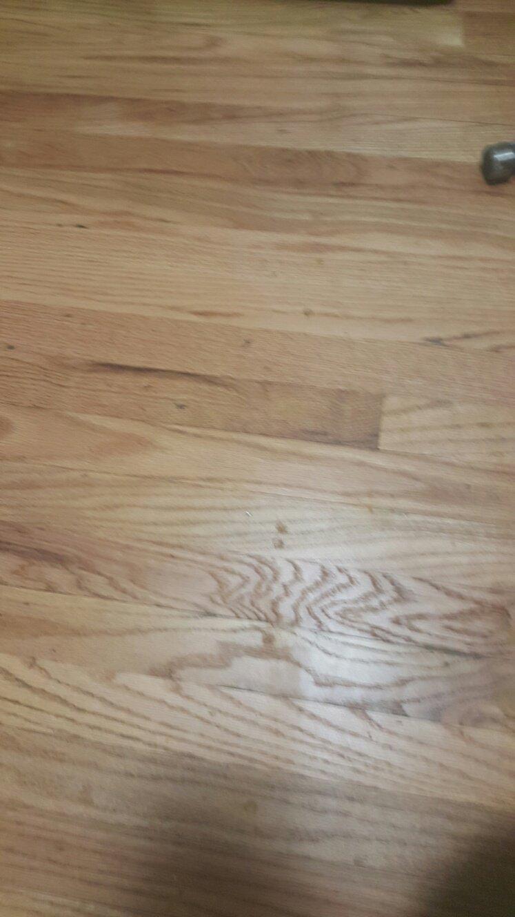 Cramer Hardwood Floors image 3