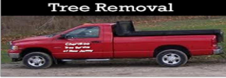 Cherokee Tree Service Of New Jersey image 0