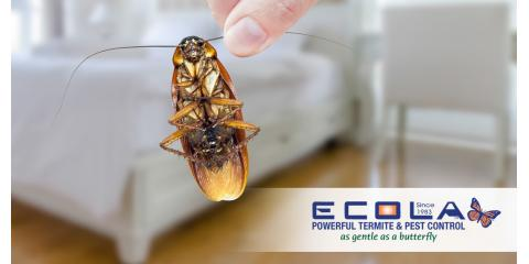 Ecola Termite and Pest Control Services image 2