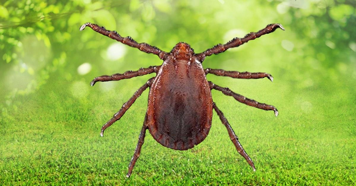 NJ Pest Control image 32