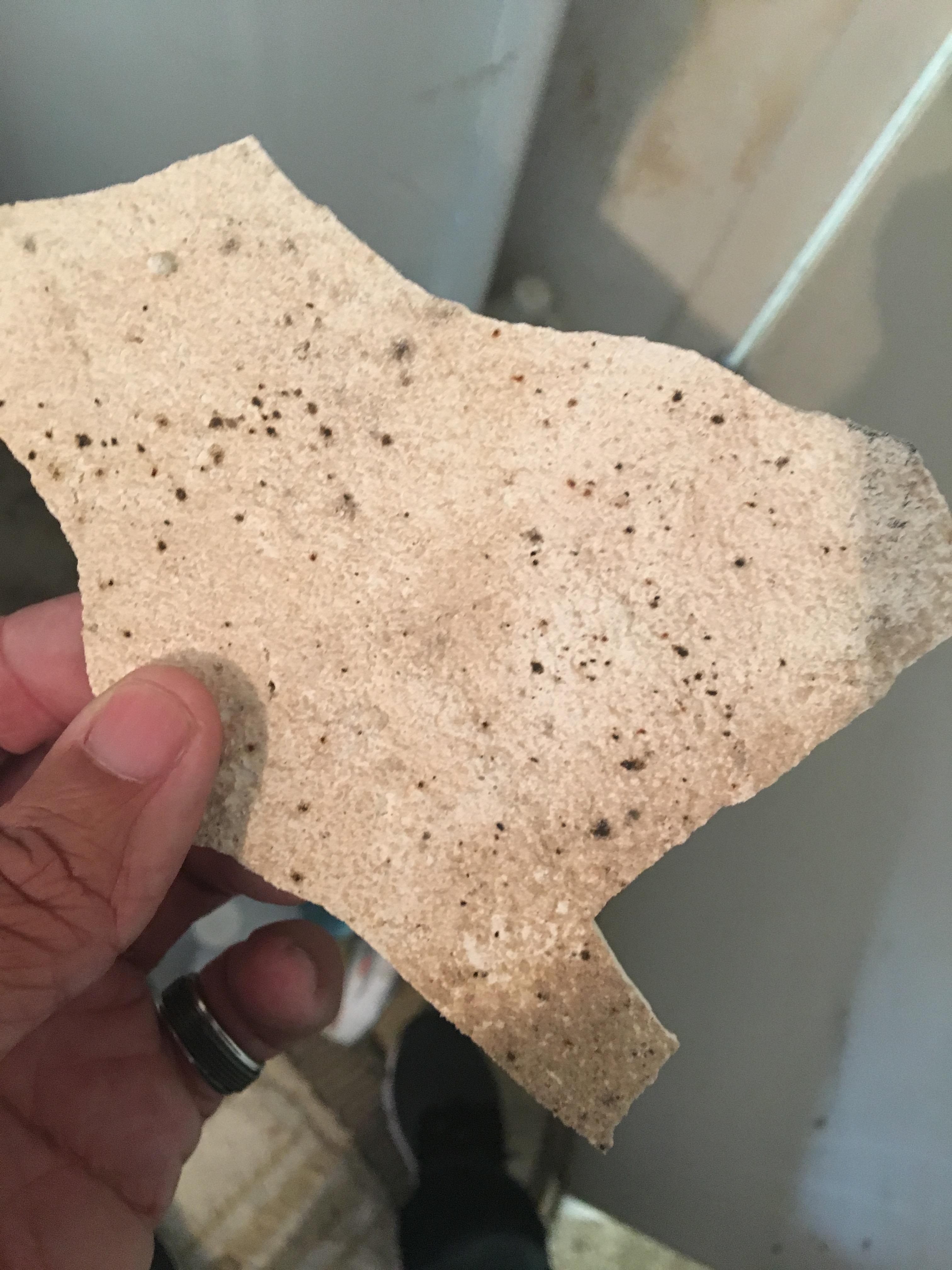 EE&G Restoration Orlando Water Damage, Fire Damage, Mold Remediation & Removal image 5