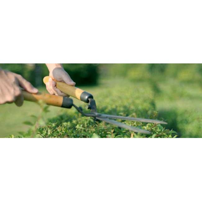 All American Landscaping & Gardening Services