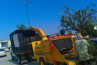 Big Green Tree Service & Landscape image 6