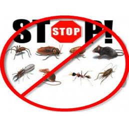 Detroit Bed Bug & Pest Control Specialist