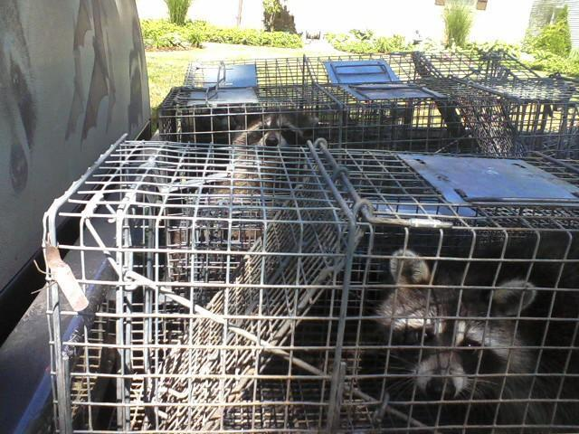 A All Animal Control image 3