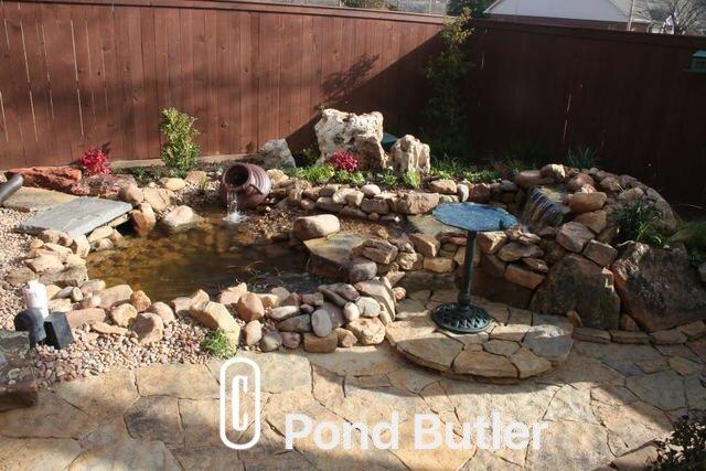 Pond Butler image 6
