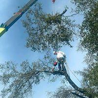 Morgan Tree Service image 3