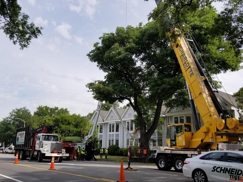 Schneider Tree Care image 1