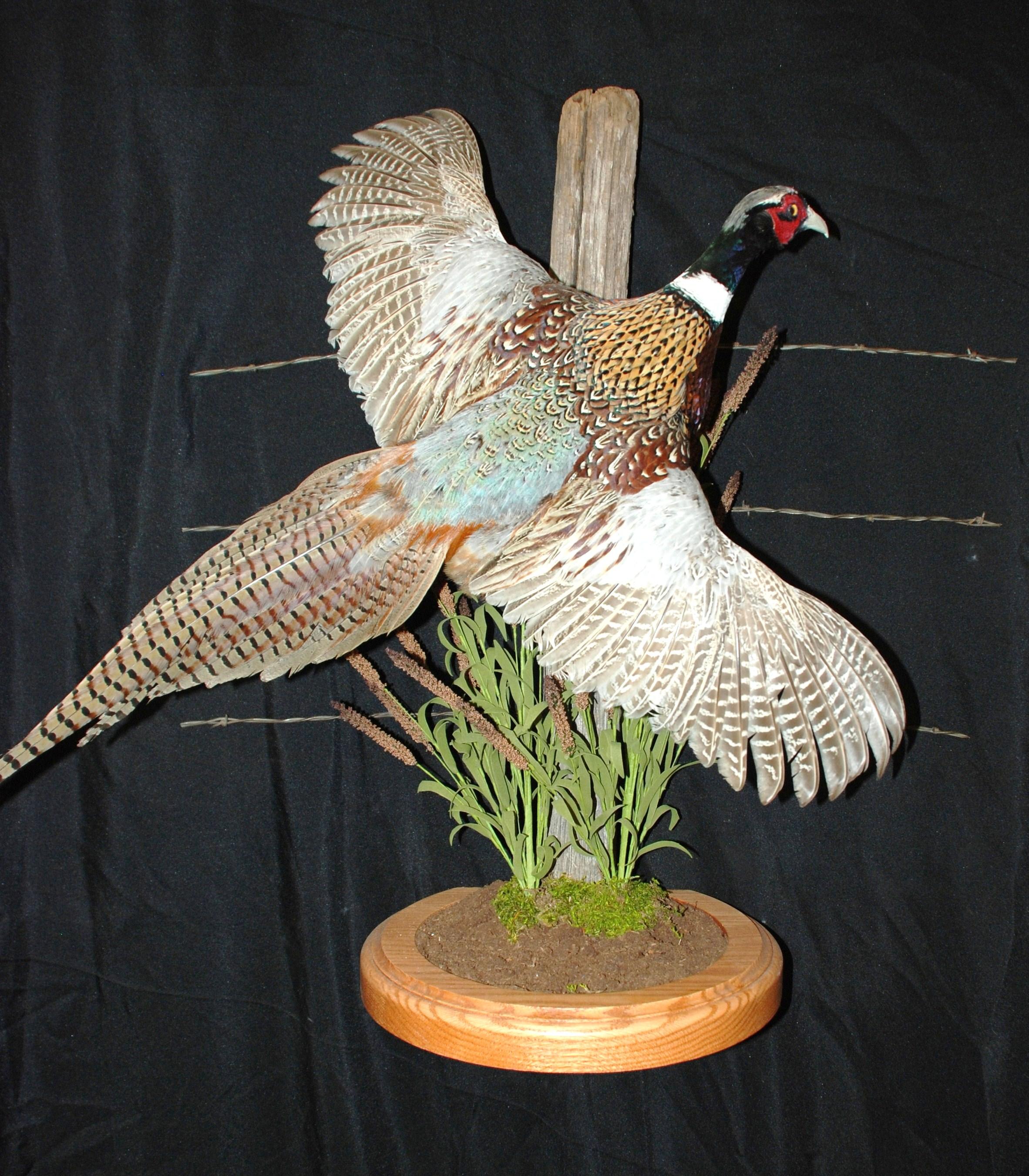 Wildlife Creations Taxidermy image 2