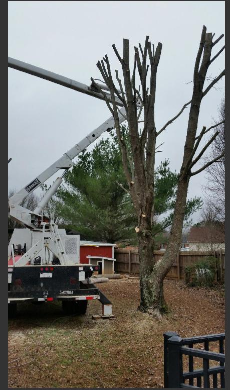 Hughes Tree Service image 0