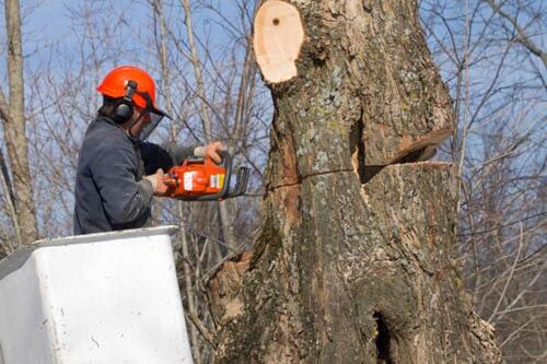 Holcomb Tree Experts image 9