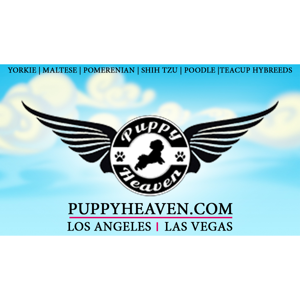 Puppy Heaven- Teacup & Toy Puppies for Sale