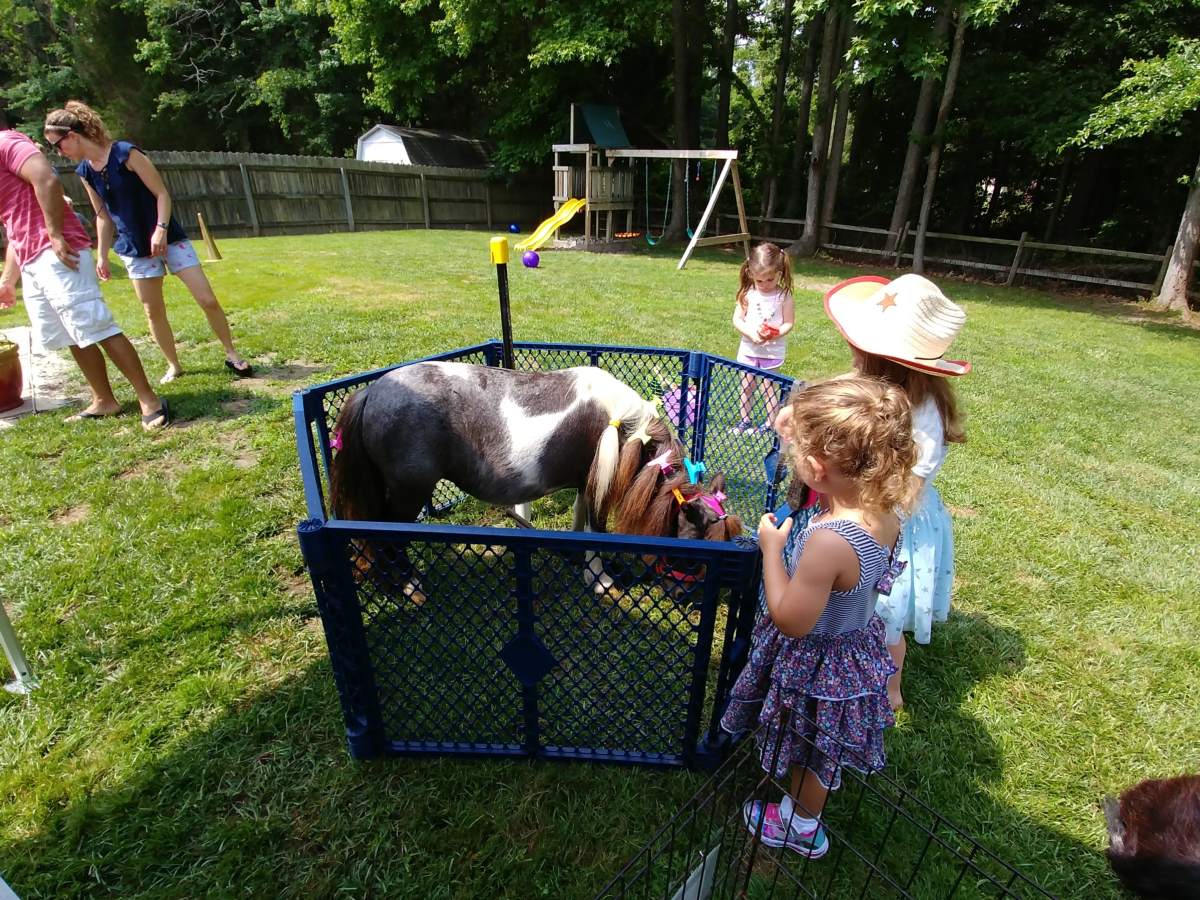 Beach Party Ponies & Barnyard Petting Zoo image 4