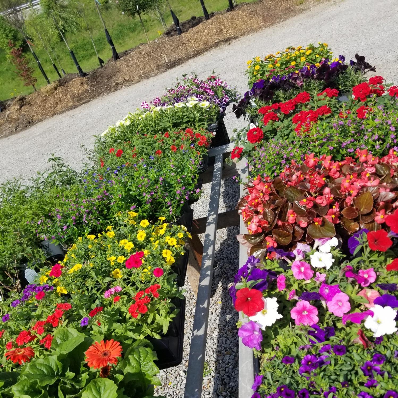 Shelby Nursery & Garden Center image 6