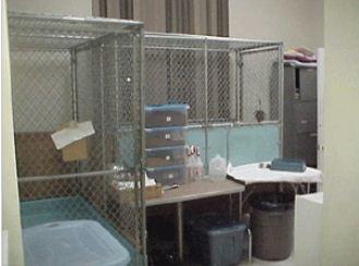 Basic Pet Care Animal Hospital - Dr. Peter Lugten image 3