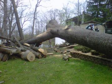 Adirondack Tree Specialists Inc image 3