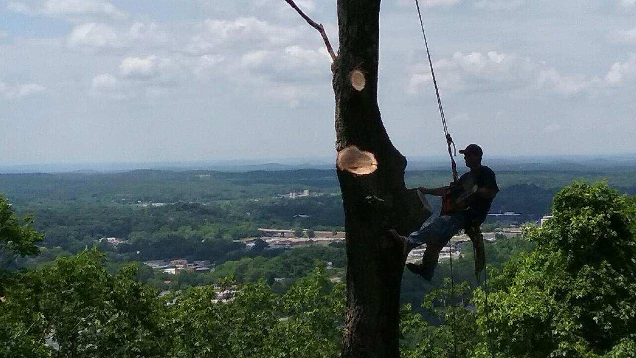 Elliott's Tree Service, LLC image 4