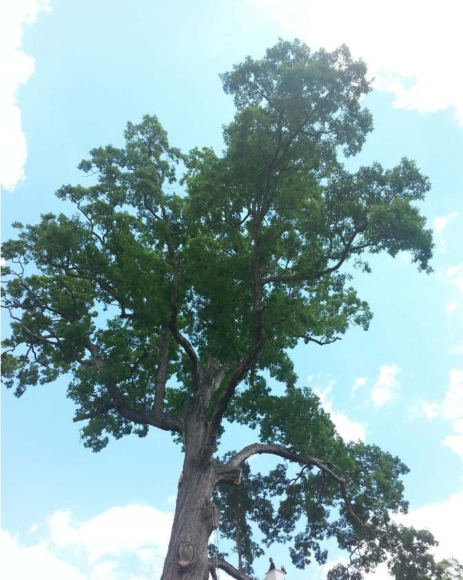 Hughes Tree Service image 3