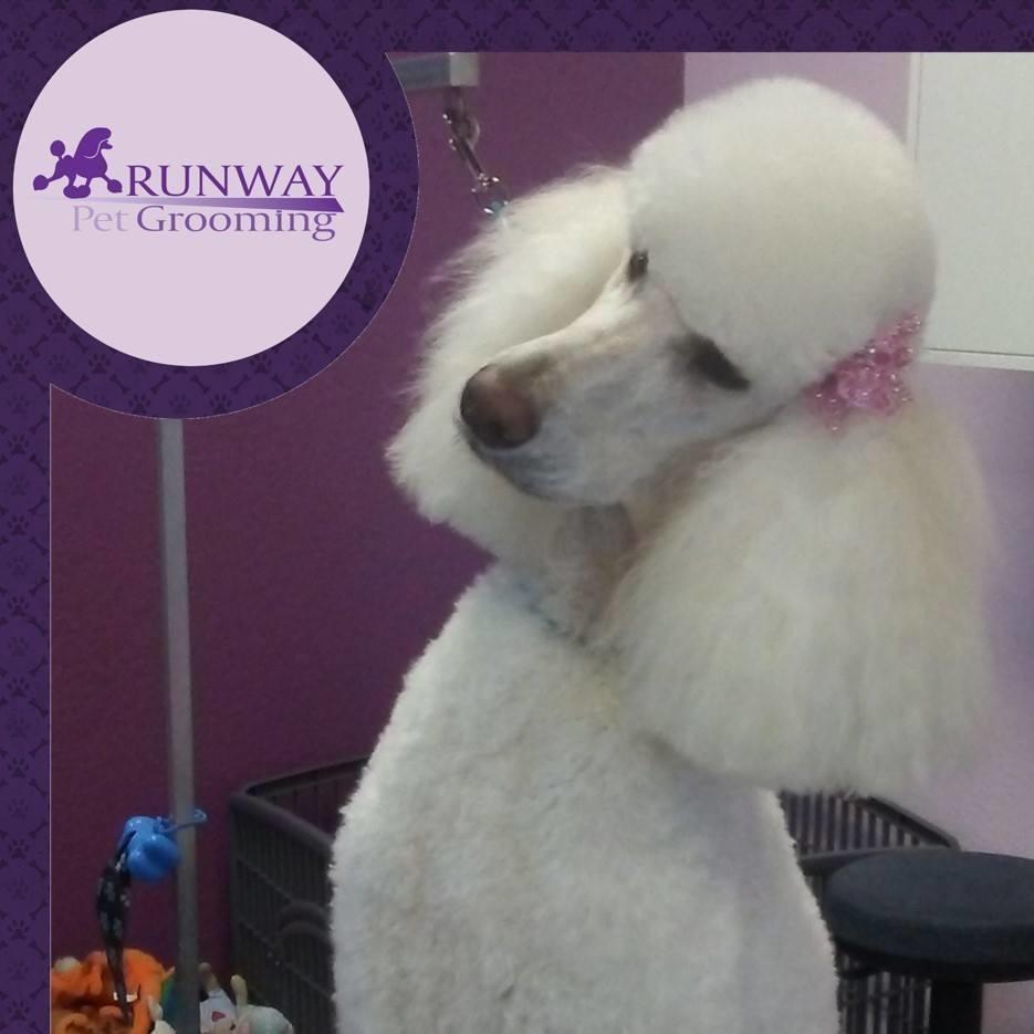 Runway Pet Grooming image 0