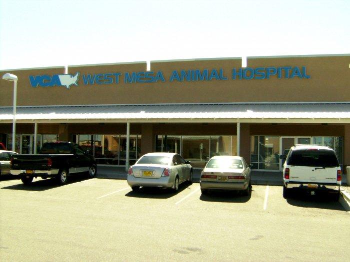 VCA West Mesa Animal Hospital image 7