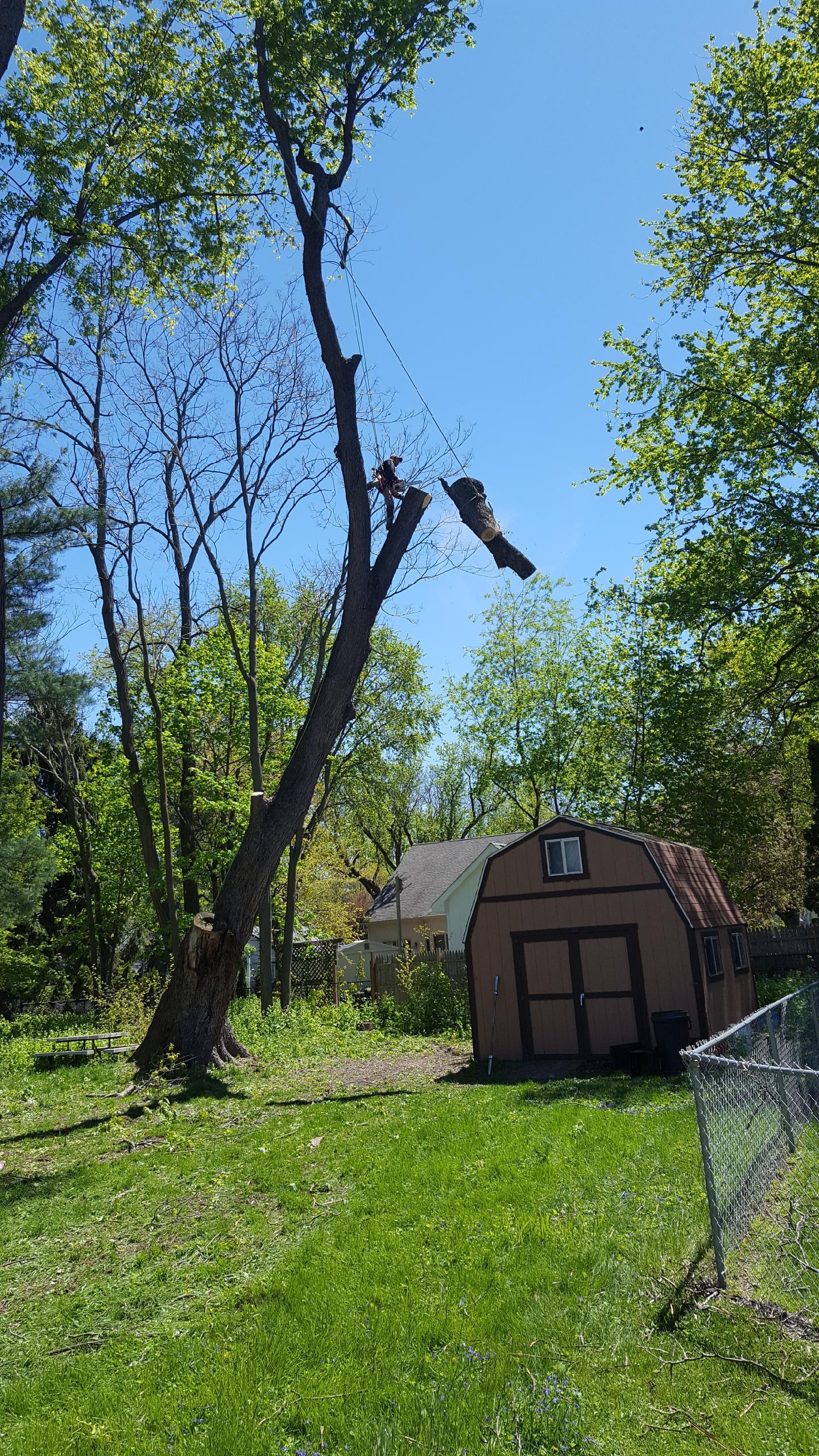 Coffman's Tree Service image 39