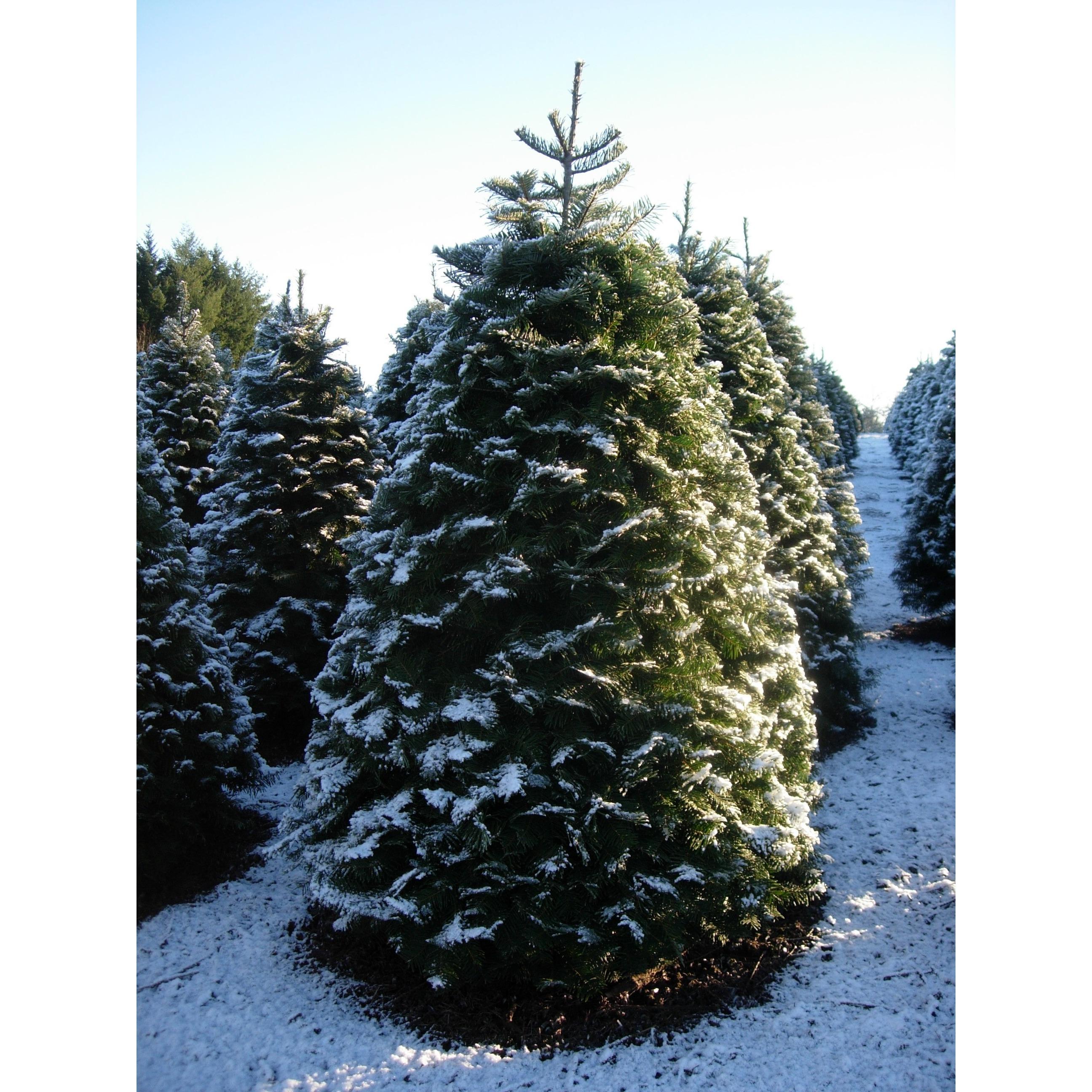 Crossties Tree Farm LLC image 5