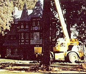 Able Tree Services image 7