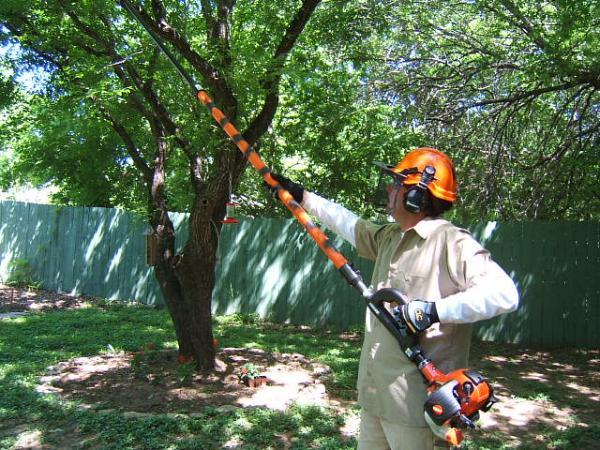 Tree Cutters LLC image 3