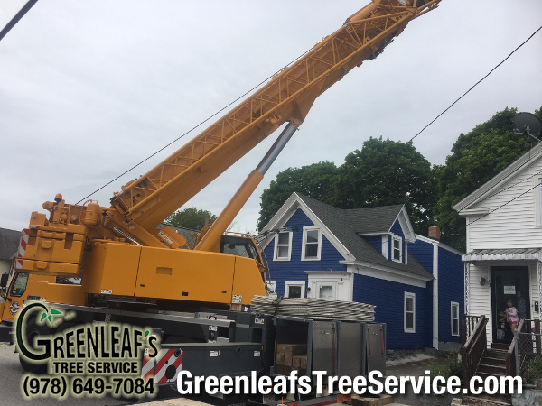 Greenleaf's Tree Service image 39