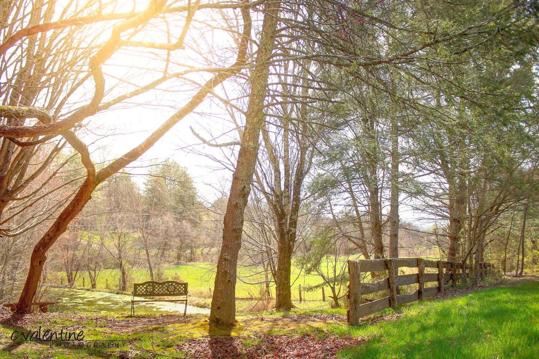 Maple Lane Farm image 4