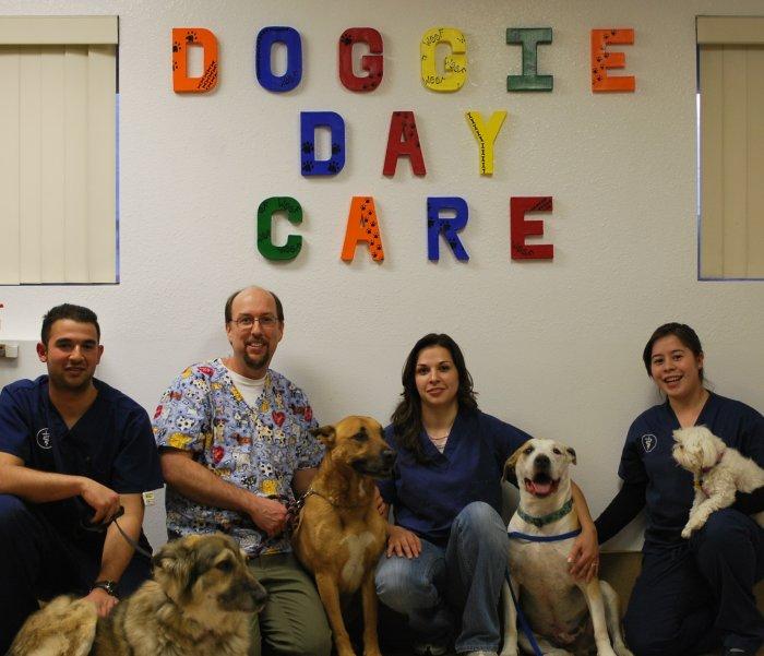 VCA Adler Animal Hospital and Pet Resort in North Hills, CA, photo #5