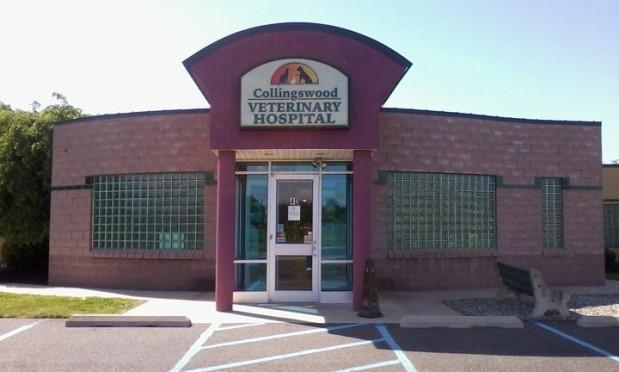Collingswood Veterinary Hospital image 0