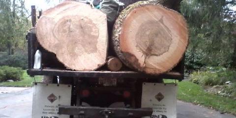 Chief Beaver Tree Service image 0