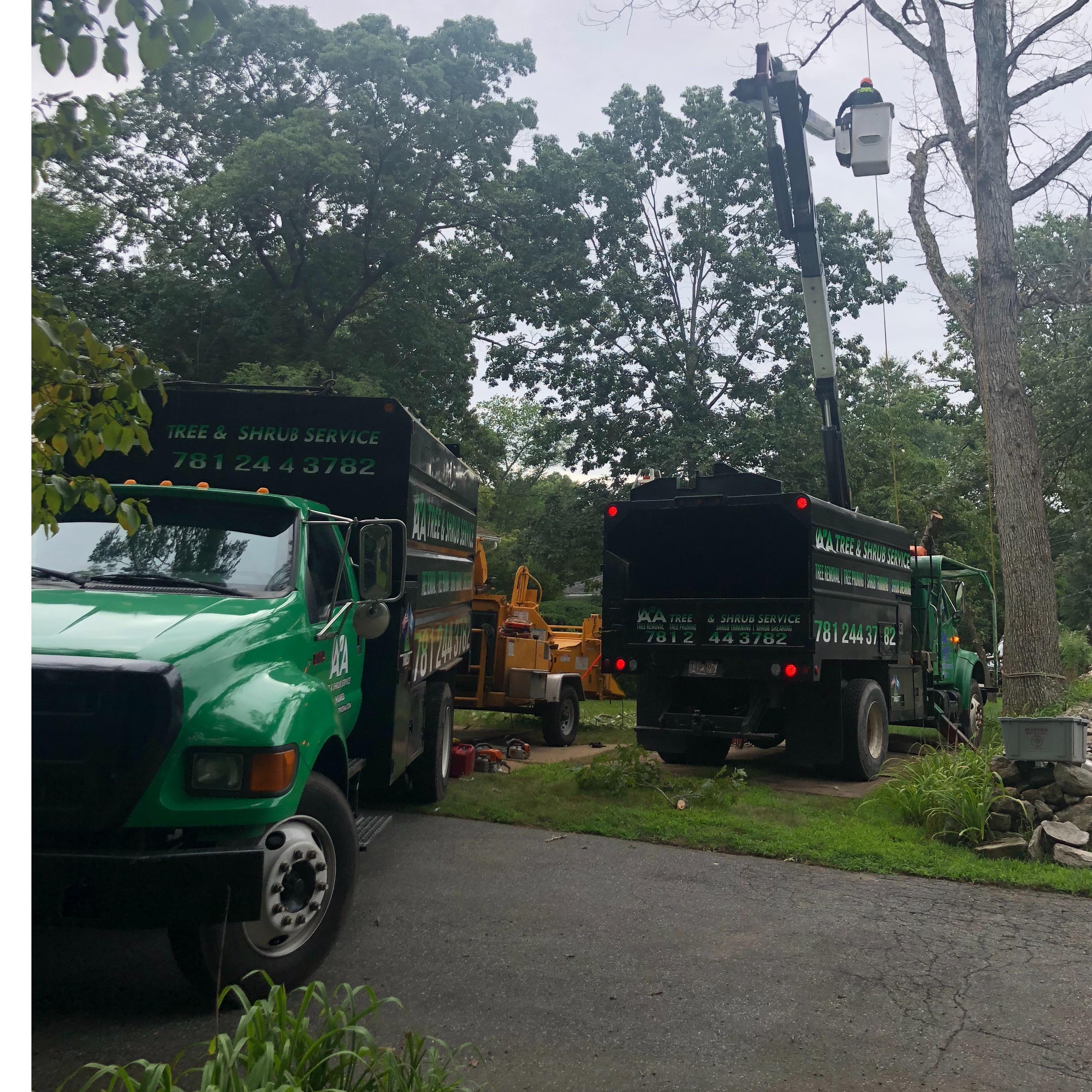 AA Tree & Shrub Service