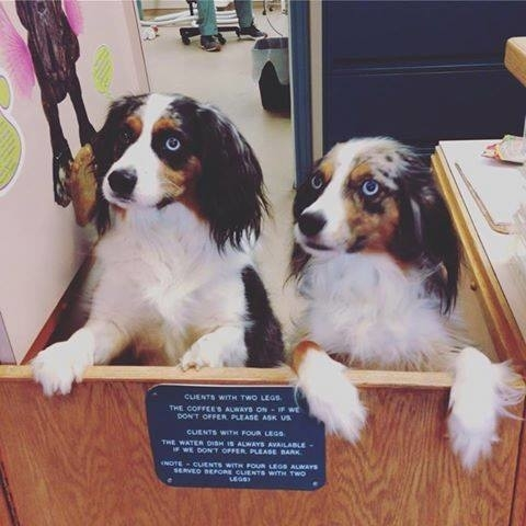 Small Creatures Pet Clinic in Langley