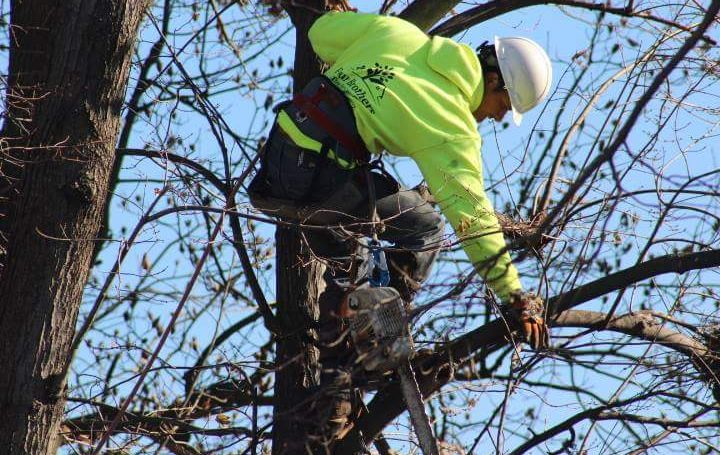 Four Brothers Tree Service Inc. image 18