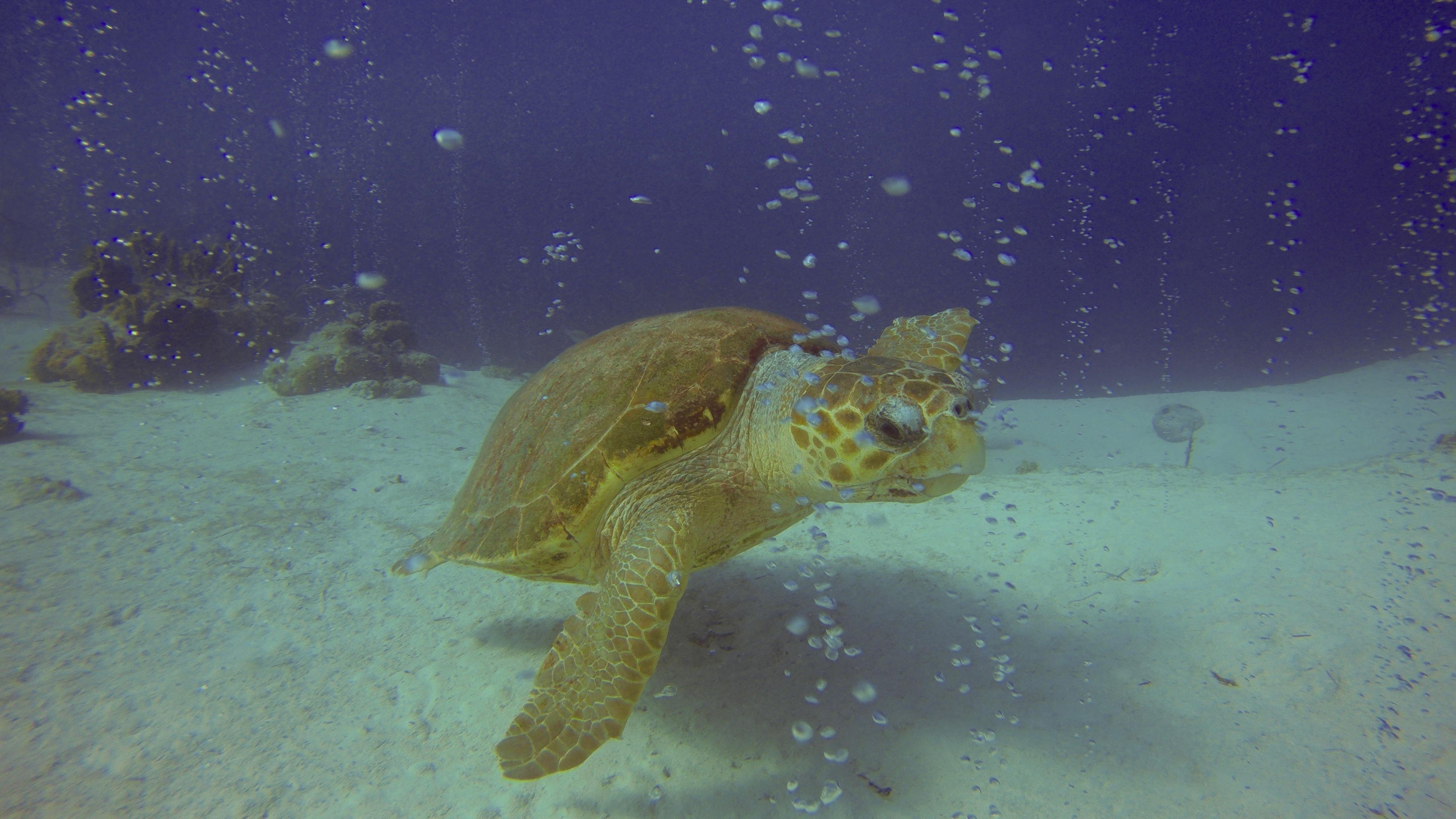 Underwater World Inc. image 2