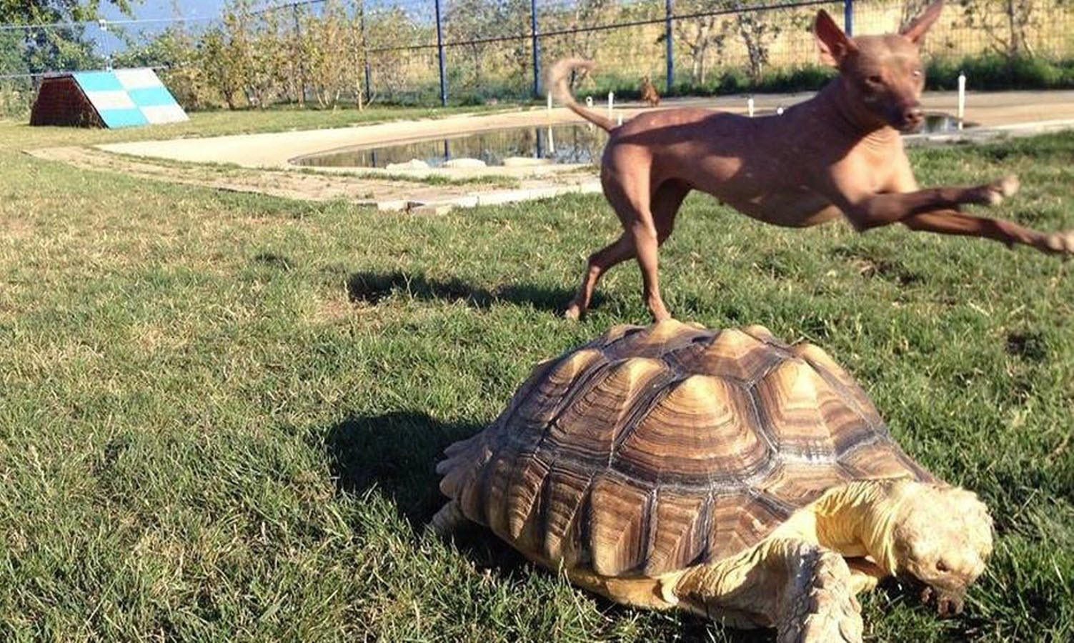 The Tortoise & The Hairless Pet Services