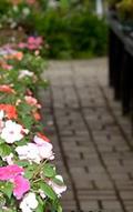 Snavely's Garden Corner image 5