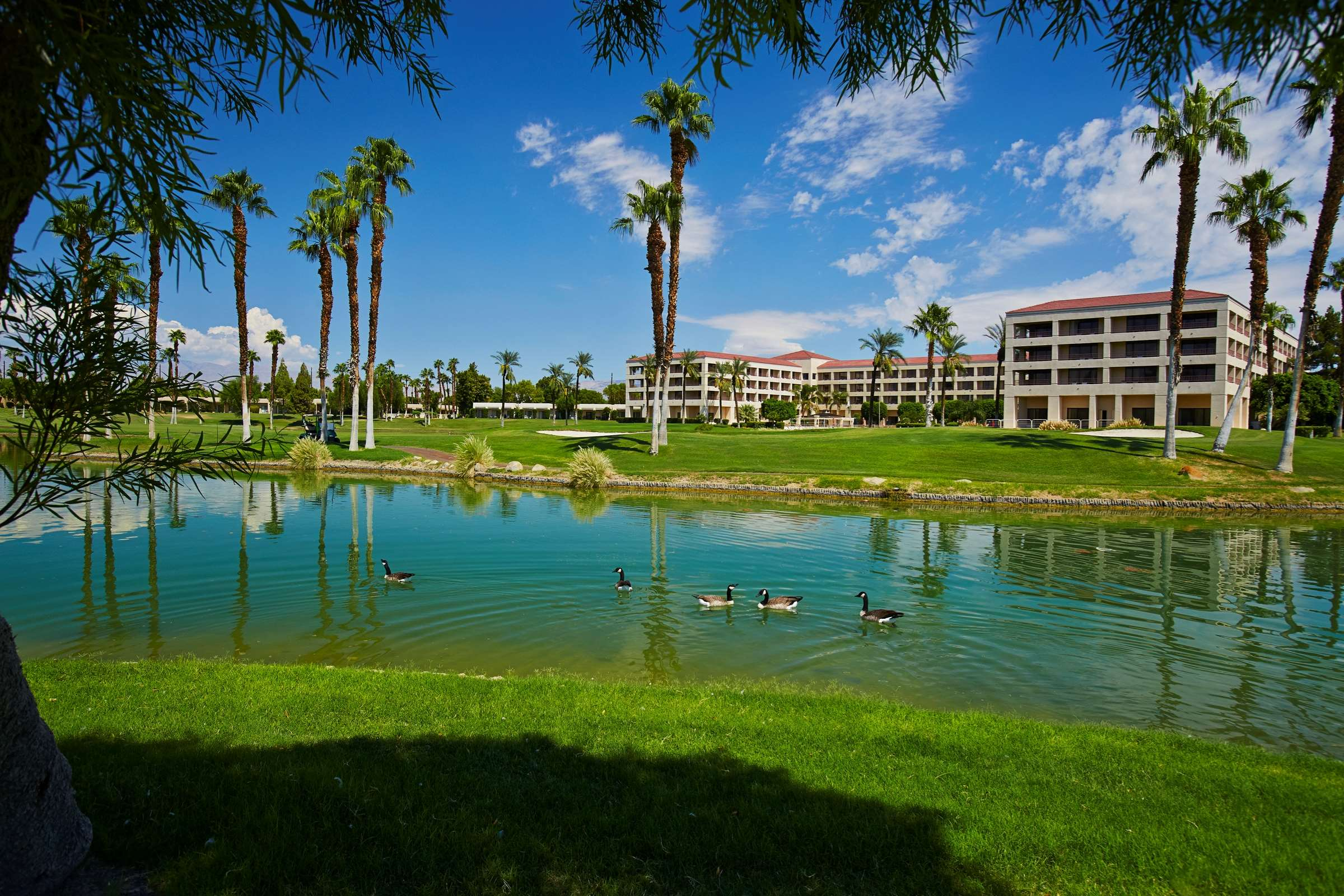 DoubleTree by Hilton Hotel Golf Resort Palm Springs image 47